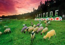 Latitude Sheep
